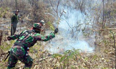Hutan Lindung Ranuyoso Lumajang, Terbakar 19 Hektare