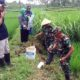 Koramil Klakah Lumajang Perangi Tikus, 'Terjun' ke Sawah bantu Petani