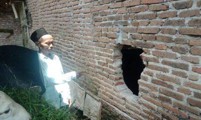 Warga tunjukkan tembok kandang yang dibobol komplotan pencuri sapi.
