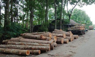 Penebangan yang dilakukan di kawasan Alas Burno Hutan Damaran area Wisata Siti Sundari, Kabupaten Lumajang.