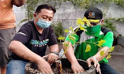 Eks Lokalisasi Dolog Jadi Pilot Project Kampung Anggur Lumajang