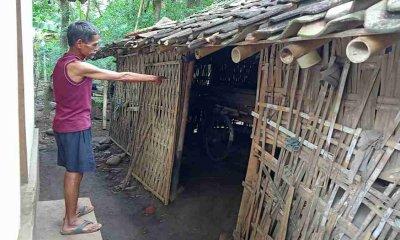 Tren Pencurian Sapi Bakal Naik, Terbukti… Dua Ekor di Lumajang Amblas dalam Semalam